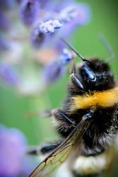 Bee by twinklingstarcatcher