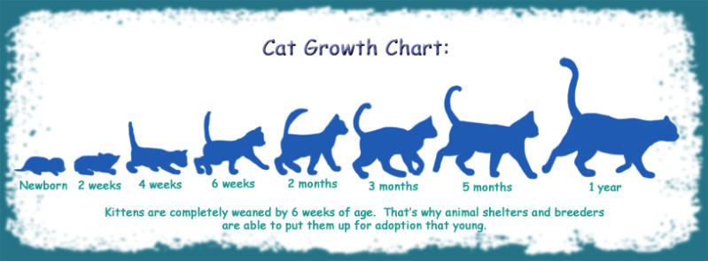 Cat Growth Chart by funlakota