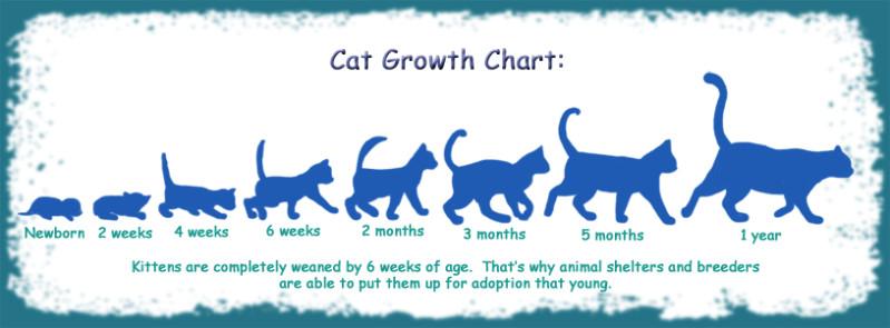 Cat Growth Chart By Funlakota