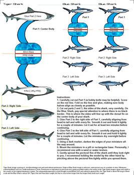 Tiger Shark Mini 01 (16ft)