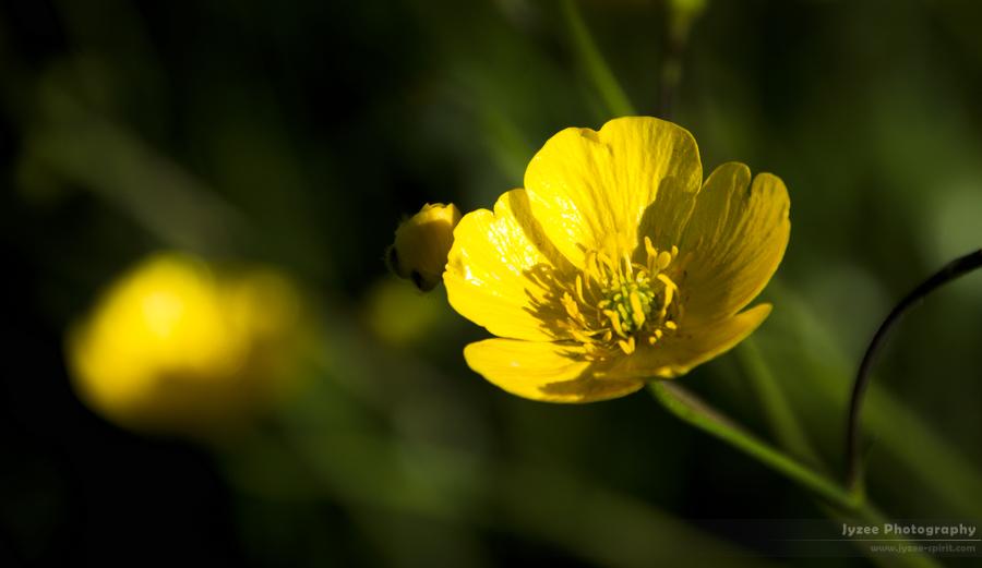Little Yellow Flower by Jyzee