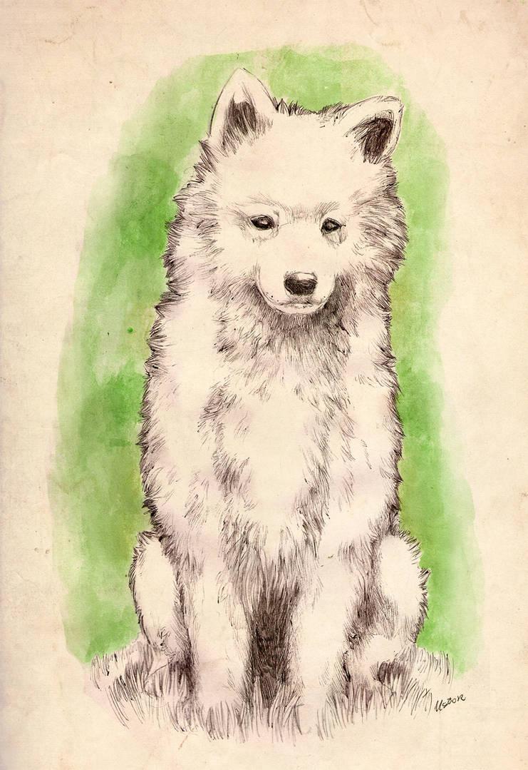 Samoyed Puppy By Lycanium On Deviantart