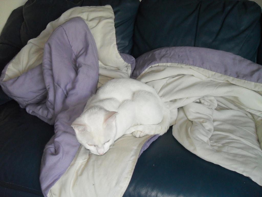 Sleepy White Cat by DarkLadyJade