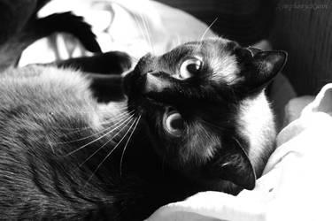 Meow by symphonyckuroi
