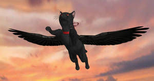 The flying cat!!! by ChrisTalyus
