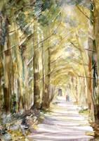 Pine Walk, Tehidy by ShanghaiSarah