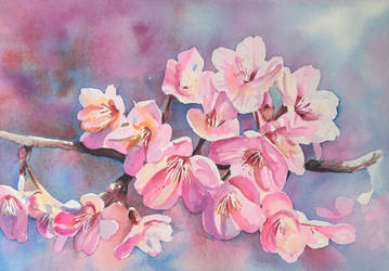 Cherry Blossom by ShanghaiSarah