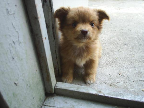 puppy by annyra