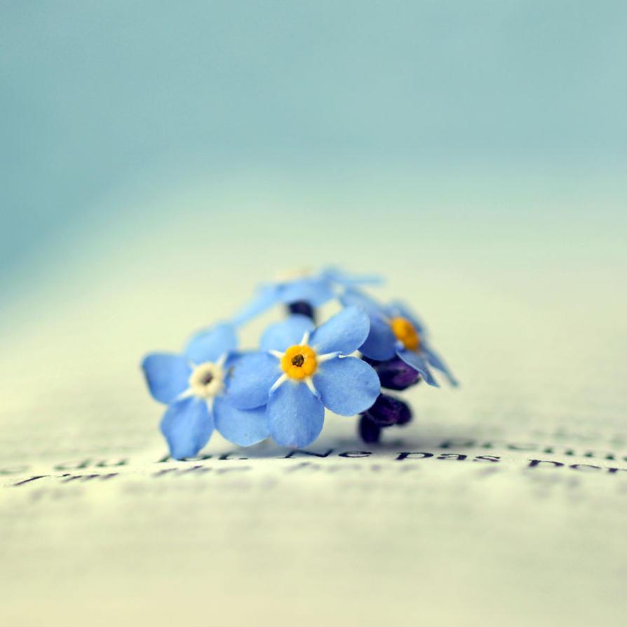 Forget me not by Retaediamrem