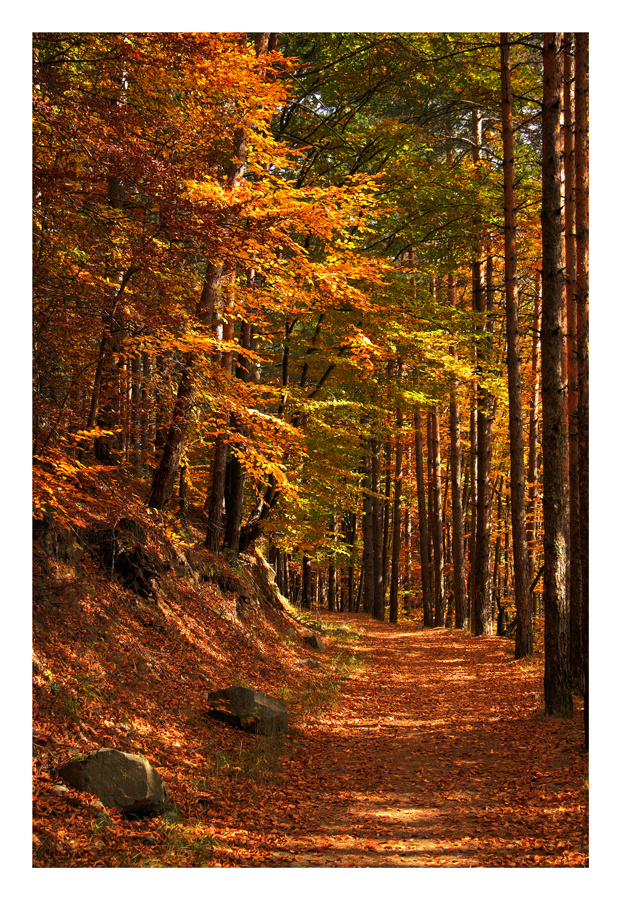 Fall by Mutatonomine