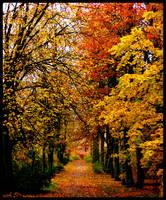 Path by natajla