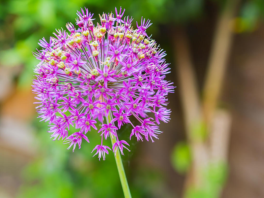 FREE STOCK!! Purple Flower 17 by mzkate