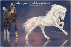 Caballos : White grey Andalusian Horse by Seenae