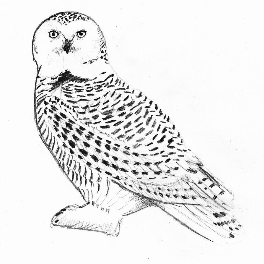 Just An Owl by LovelyHufflePuff on DeviantArt