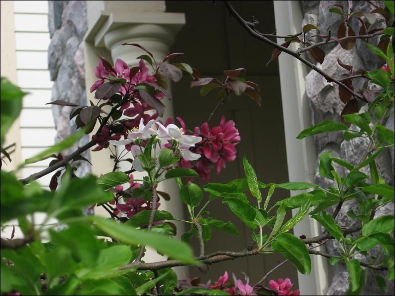 lol tree flowers by MellySandshrew