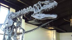 RGDE Allosaurus