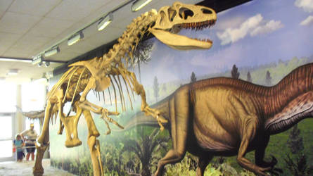Dinosaur National Monument Allosaurus