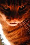 Demon's Kitty