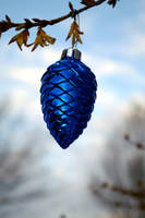 Different fir cone by Tricia-Danby
