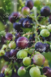 Take the fruits when they are ripe