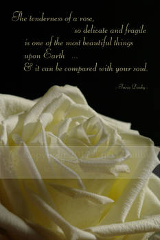 The Tenderness of a Rose