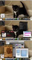 Mac OS X Kitten