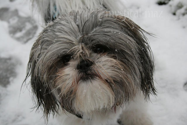 Oozy in the snow