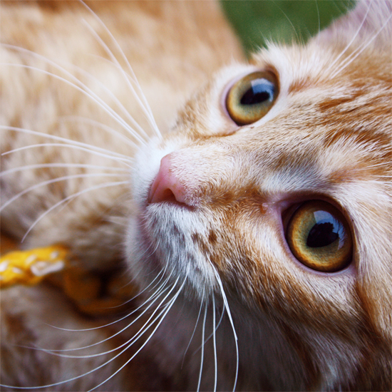 Kitty by Klaamka