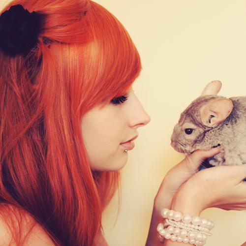 Lily Luna Potter Chinchilla__webcam_by_klaamka-d3kjae1