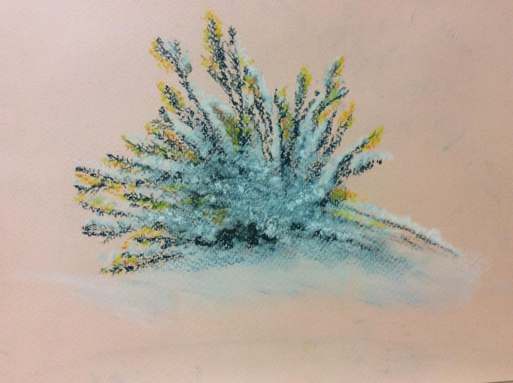 Gorse bush in snow by Jennyben
