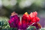 .: Last Leaf :.