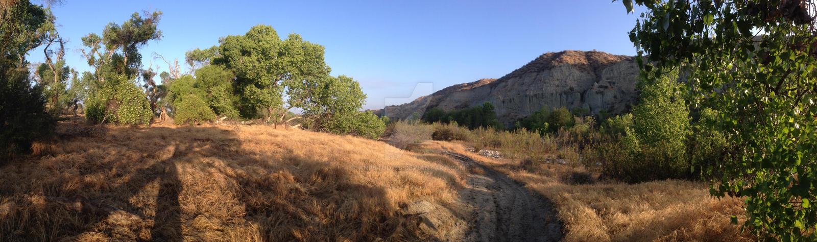 Walking The Morning Trail