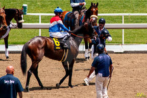 A Day at the Races 021
