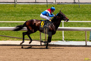 A Day at the Races 027