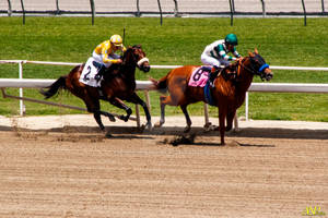 A Day at the Races 029