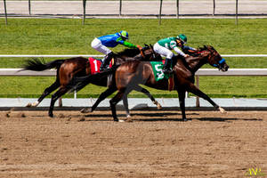 A Day at the Races 048