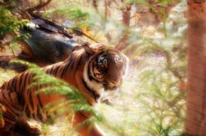 Tiger by mufiinek
