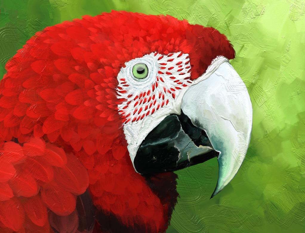 Project papagaj 1 - Scarlet Macaw by Jasper-19