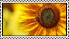 Sunflower Stamp by Kennaleecat