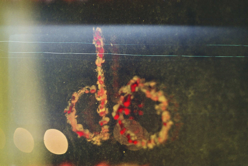 neonihil's Profile Picture
