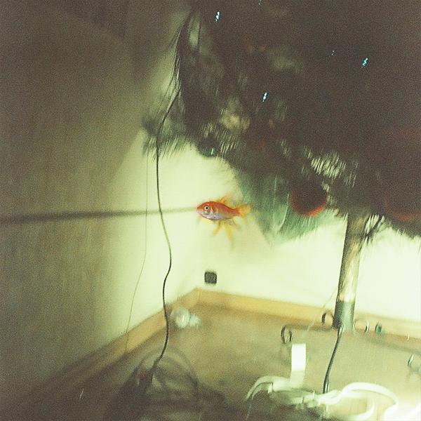 golden fish by neonihil