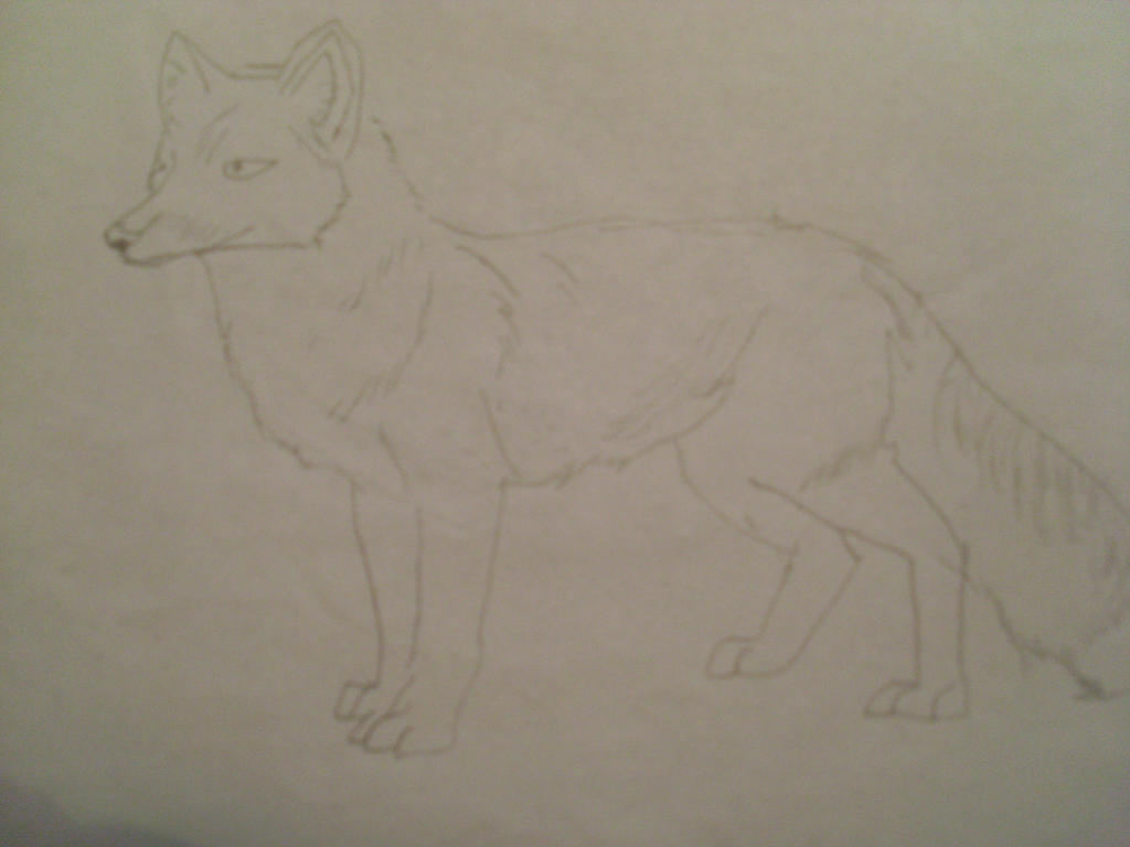 RED FOX (unfinished) by skyres2