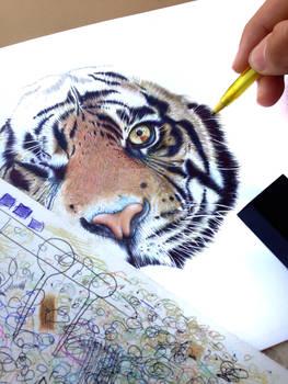 One Eyed Tiger - Ballpoint Pens