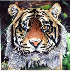 One Eyed Tiger - Ballpoint Pen