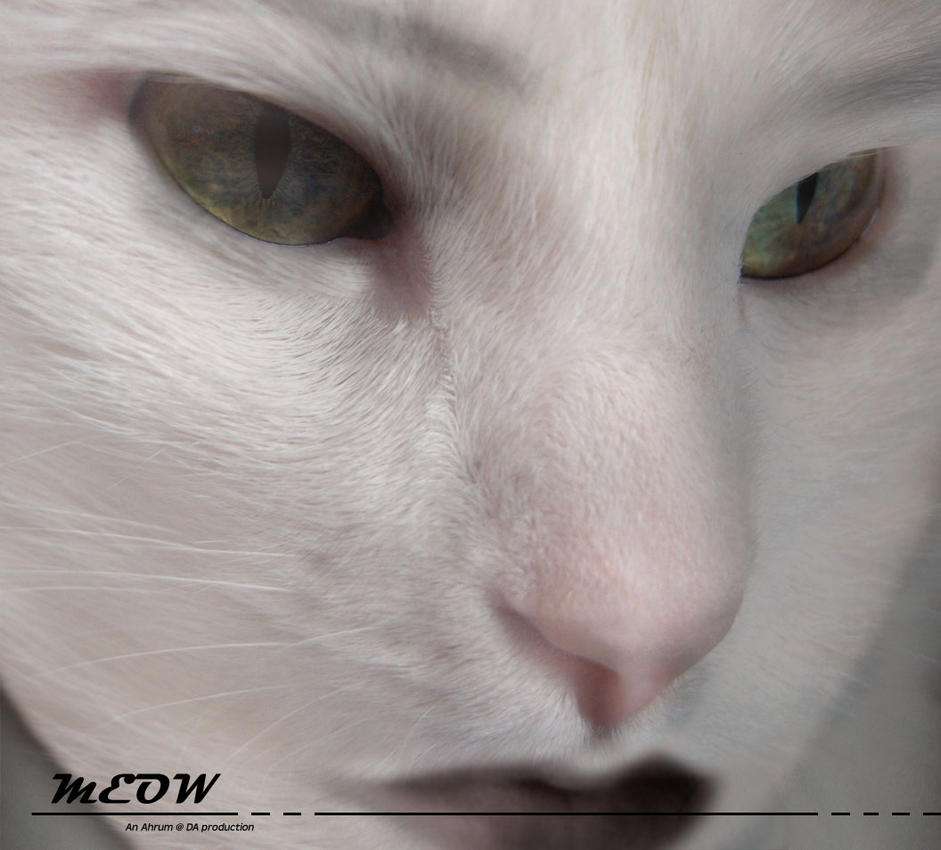 Meow Mix: A Beauty of a Beast by Ahrum