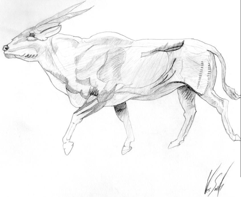 Strolling Ox by matrix7