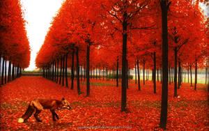 Red Foxy by Masterwow