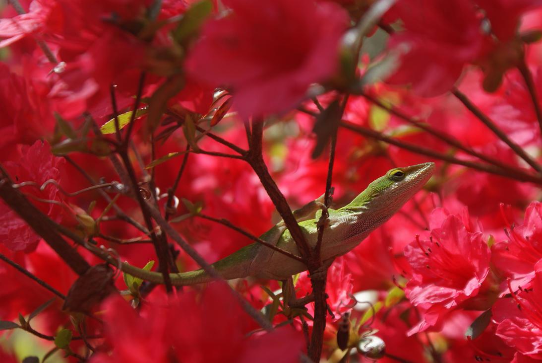Spring Lizard by Wildweasel339