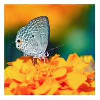 butterfly 2 by Godling-Studio