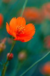 flower by Godling-Studio